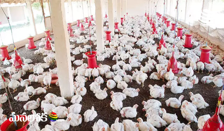 Then Corona .. Now the fear of bird flu .. Difficulties for the poultry industry ..
