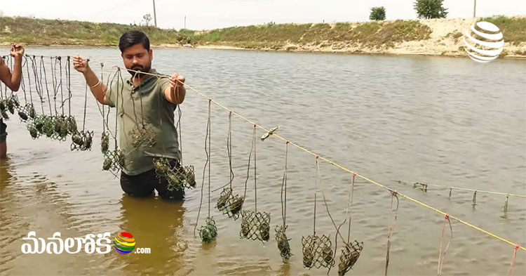 bihar youth earning in lakhs with pearls farming